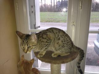 Cherche FA proche Redon pour plusieurs chats Img_0599-3aa16c4