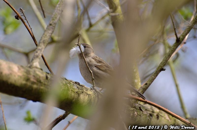 pour le plaisir Dpp_-oiseaux--0006-3d87bb6